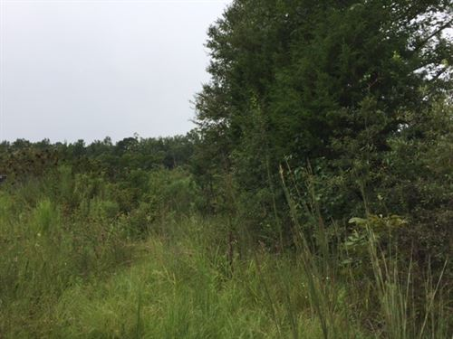 Hunting & Recreational Tract : Canton : Madison County : Mississippi