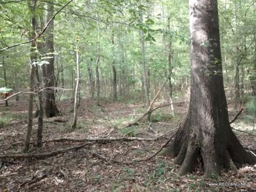 471 Ac - Managed Timberland Investm : Nacogdoches : Texas