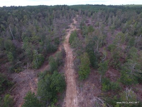 148 Ac - Wooded Tract For Hunting : Jasper : Texas