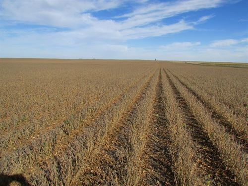 Working Farm & Ranch All Contiguous : Ree Heights : Hand County : South Dakota