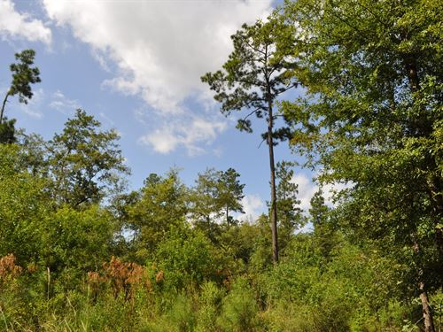 57.2 Acres Menard Creek : Rye : Liberty County : Texas