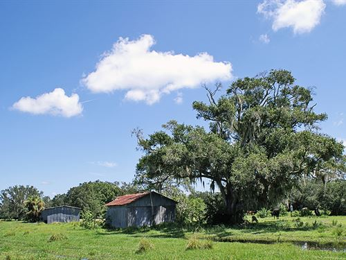 Pollywog Creek Ranch : Labelle : Glades County : Florida