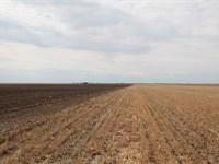 Ebke-Hagemann Land Auction : Chappell : Deuel County : Nebraska