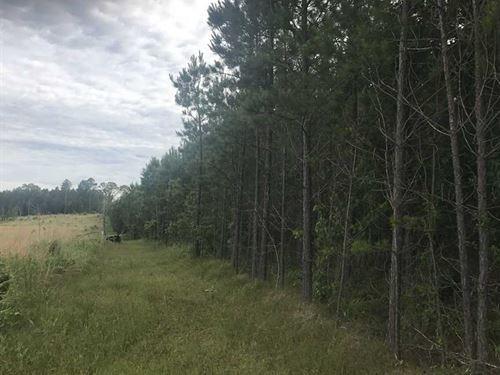 40 Acres of Pine Plantation : Grapevine : Grant County : Arkansas