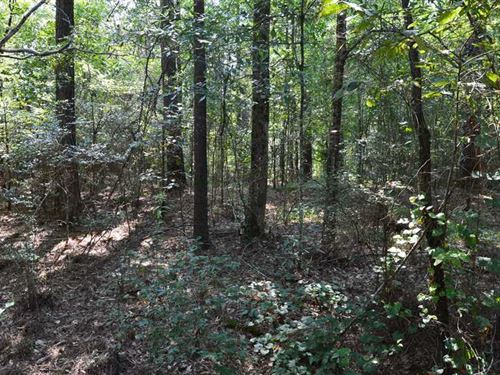 109 Acres Timber And Hunting Land : D'lo : Simpson County : Mississippi