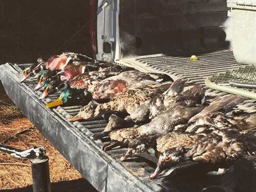 206 Acre Deer & Duck Hunting Tract : Sebastopol : Newton County : Mississippi