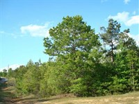 25.40 Acre, Tract 34, Mini-Far : Brandon : Rankin County : Mississippi