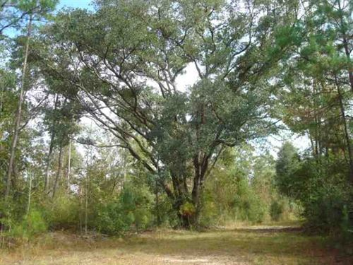 60 Acres Hunting, Timber, & Re : Picayune : Pearl River County : Mississippi
