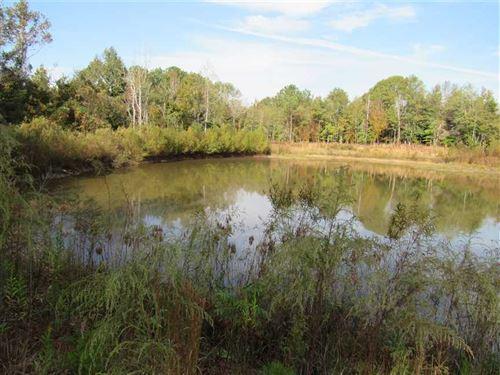 100 Acres, A Sportsman Paradise : Heidelberg : Jasper County : Mississippi