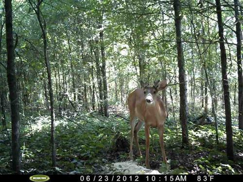 80 Ac, of Fine Deer & Duck Hun : Oak Grove : West Carroll Parish : Louisiana