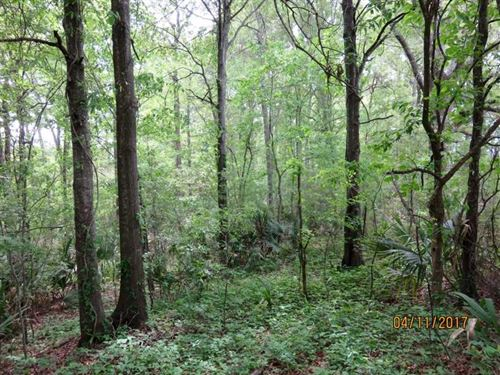 25 Ac, of Great Deer & Duck Hu : Saint Joseph : Tensas Parish : Louisiana