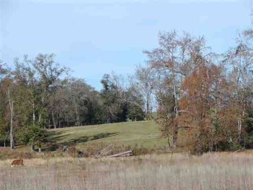 Land For Sale 407 Acres Burke : Keysville : Burke County : Georgia