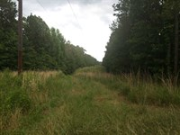 Hunting Land 425 Acres For Sale : Pickens : Holmes County : Mississippi