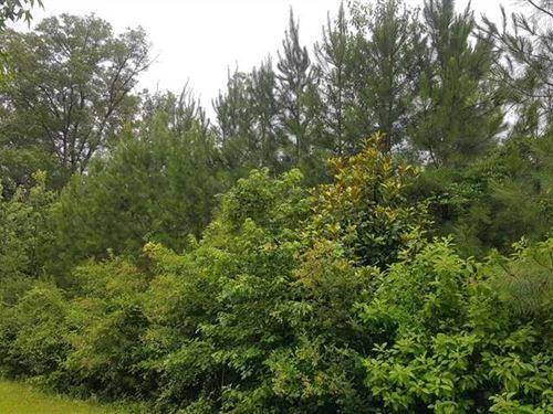 Bums Tract, Bienville Parish, 11 : Saline : Bienville Parish : Louisiana