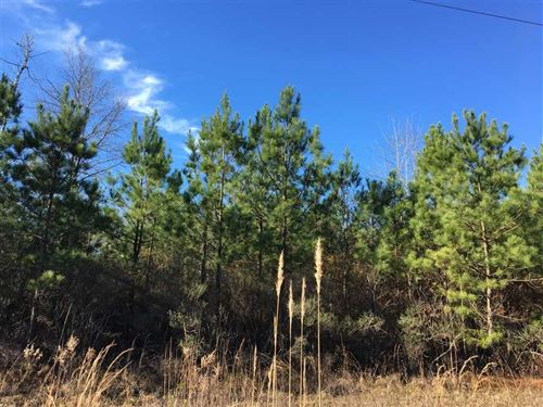 Lewisville Southeast Tract, Lafaye : Lewisville : Lafayette County : Arkansas