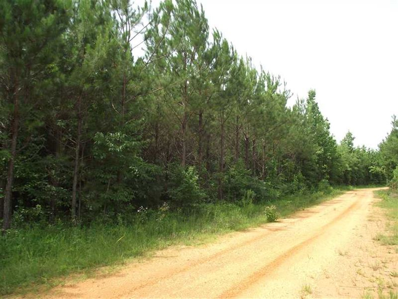 Recreational Tract 470 Acres fo : Marion : Perry County : Alabama