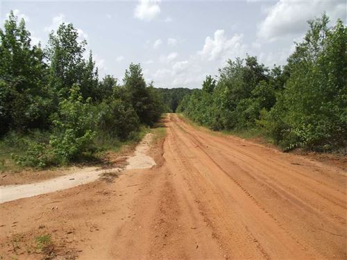 Hunting Land in Perry County AL 60 : Marion : Perry County : Alabama