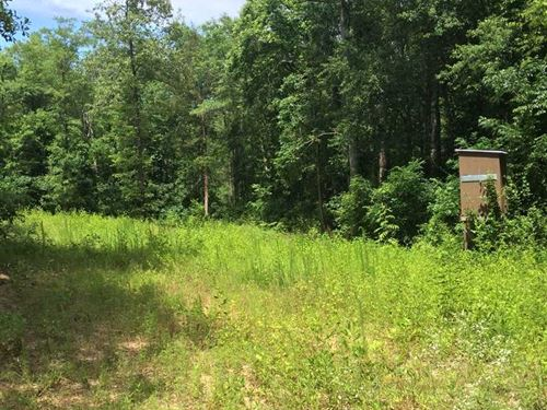 66 Acres Located Just North of : Gordo : Pickens County : Alabama