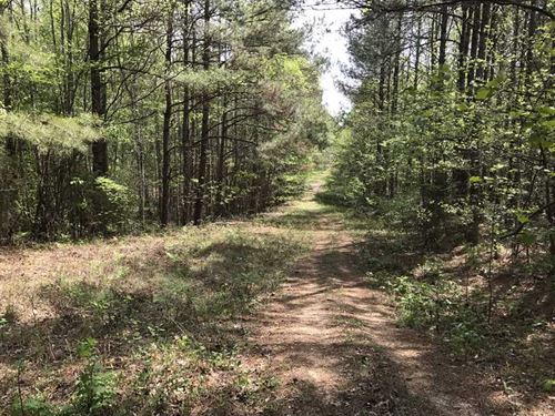 50 Acres in Fayette County Near Be : Belk : Fayette County : Alabama