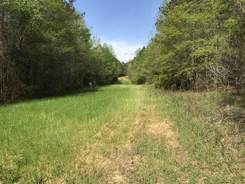 194 Acres in Fayette Co, Near Belk : Belk : Fayette County : Alabama