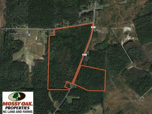 Reduced, 90 Acres of Timber And : Whiteville : Columbus County : North Carolina