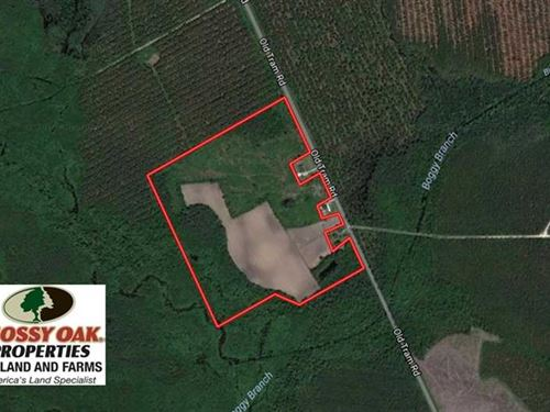 Under Contract, 50.81 Acres of Hu : Whiteville : Columbus County : North Carolina