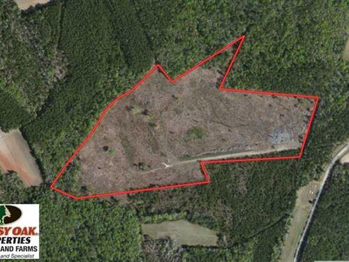 Reduced, 34 Acres of Timber And : Nakina : Columbus County : North Carolina