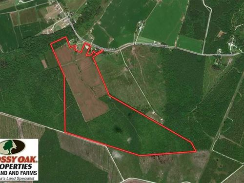 157 Acres of Farm And Timber Land : Maysville : Onslow County : North Carolina