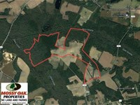 Reduced, 253 Acres of Farm And Ti : Cerro Gordo : Columbus County : North Carolina
