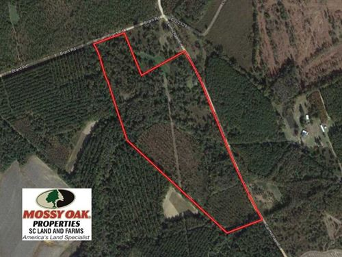 Reduced, 33.50 Acres of Hunting : Cope : Orangeburg County : South Carolina