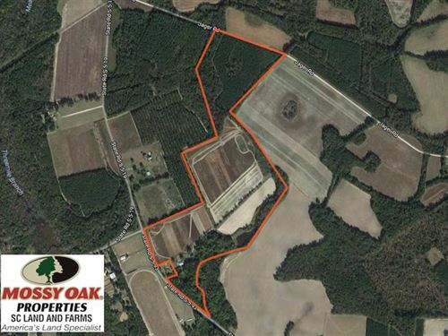 Reduced, 90 Acres of Hunting And : Ehrhardt : Bamberg County : South Carolina