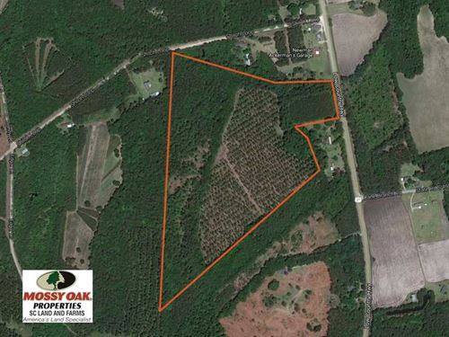 41.6 Acres of Hunting And Timber : Ruffin : Colleton County : South Carolina