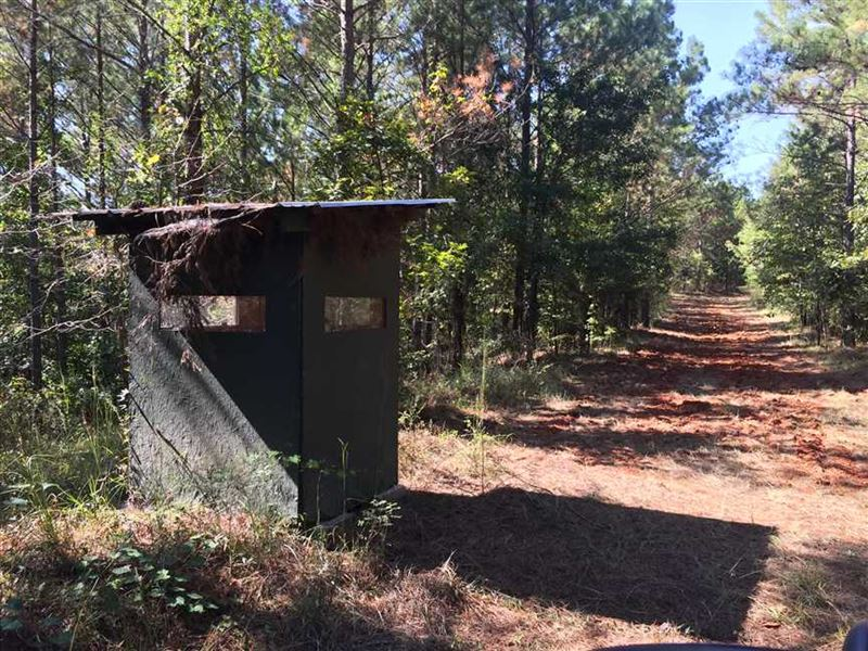 Great Hunting And Investment Trac Ranch For Sale