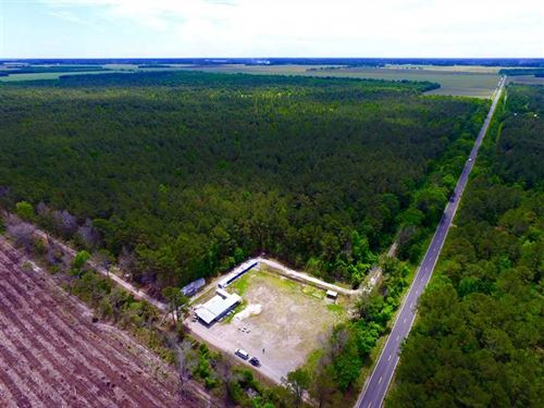 Under Contract, 352 Acres of Timb : Bayboro : Pamlico County : North Carolina