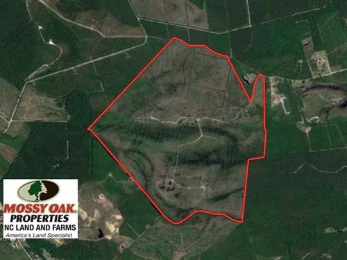 474 Acres of Hunting And Timber La : Vanceboro : Craven County : North Carolina