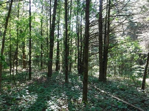 142 Acres of Recreational Timberla : Coal Hill : Johnson County : Arkansas
