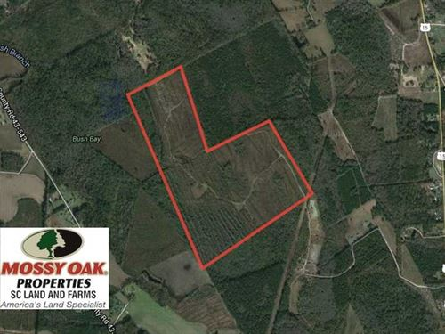 Reduced, 174 Acres of Hunting Lan : Sumter : South Carolina