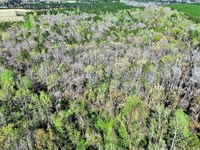 55 Acres of Investment Timber And : Vanceboro : Craven County : North Carolina