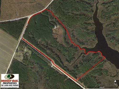 Reduced, 50 Acres of Waterfront : Scranton : Hyde County : North Carolina