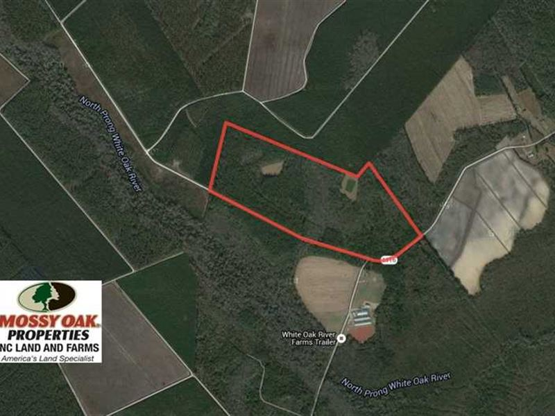 Reduced, 117 Acres of Hunting And : Maysville : Jones County : North Carolina