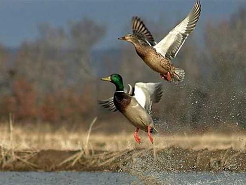 177 Acre Waterfowl Farm For Sale : Quapaw : Ottawa County : Oklahoma