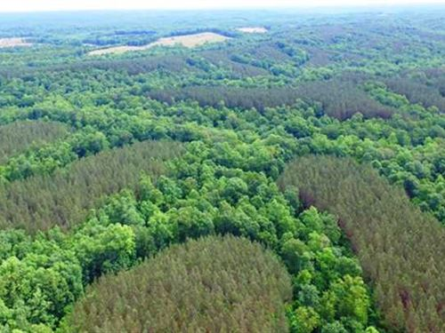Tract 12187- Furnace Hollow : Linden : Perry County : Tennessee