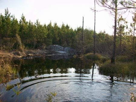 Hunting Tract With Cabin And Pond : Milan : Telfair County : Georgia