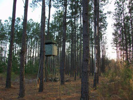 100 Acres Timber Investment : Milan : Telfair County : Georgia