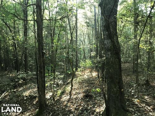 Bostic Road Hunting, Timber, And We : Gordo : Pickens County : Alabama
