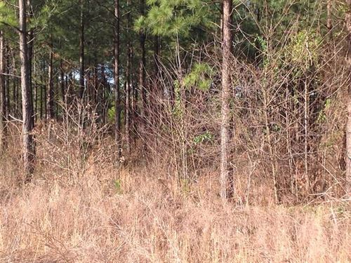 Under Contract, 203 Acres of Hunt : Long Island : Pittsylvania County : Virginia