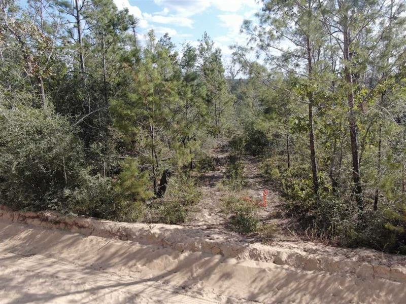 95 Acres NW Twin Ponds Road : Altha : Calhoun County : Florida