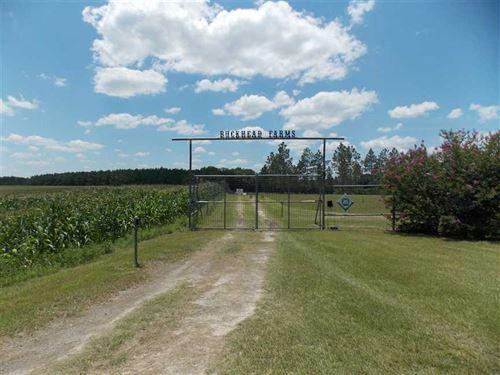 King - Buckhead Farm : Jennings : Hamilton County : Florida