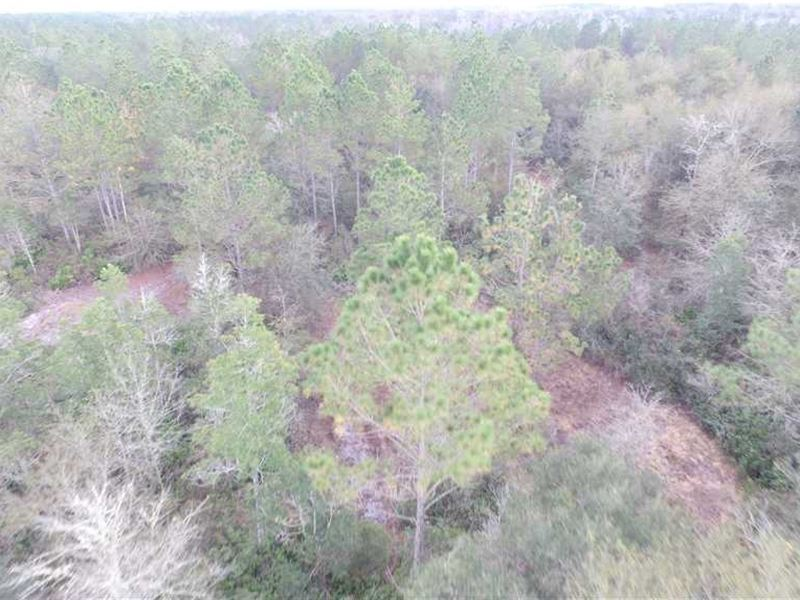 Hunting Tract on SW Henry Road : Madison : Madison County : Florida