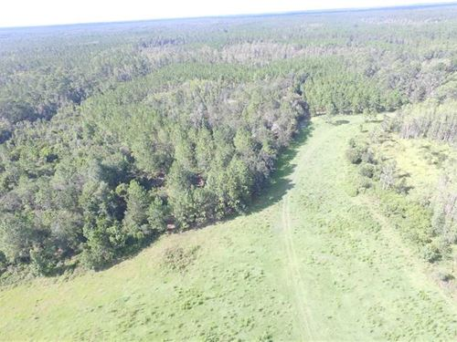 SW Moseley Hall Road 80 Acres : Madison : Florida